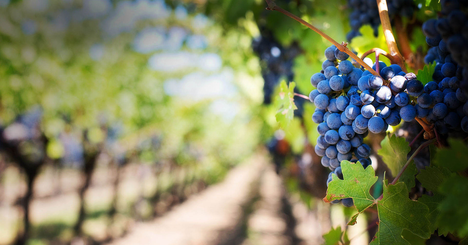 Kalamos Winery